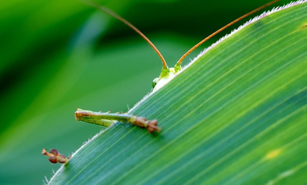 eye-grasshopper-green-65642