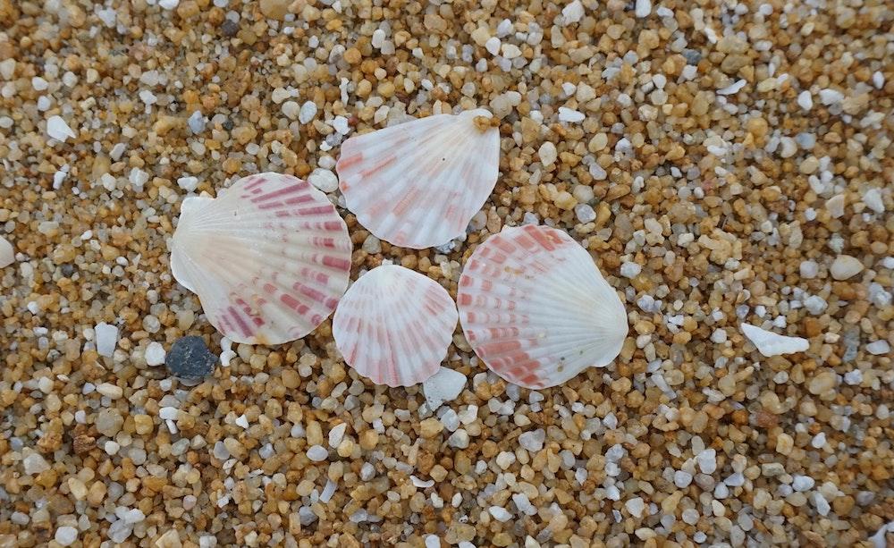 beach-conch-island-246469